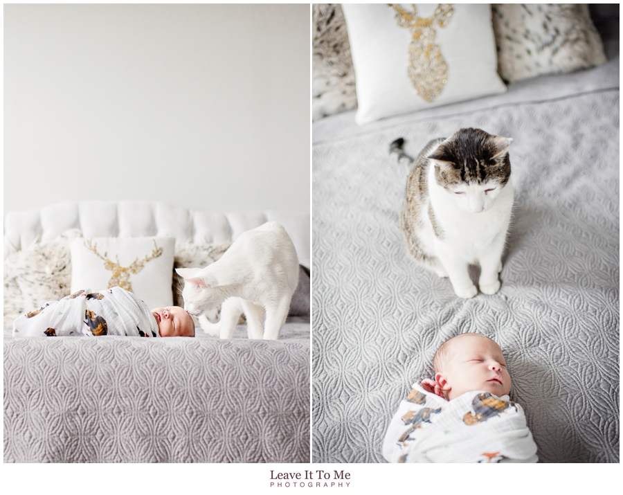 New Jersey Newborn Photographer_Newborn and Pets 3