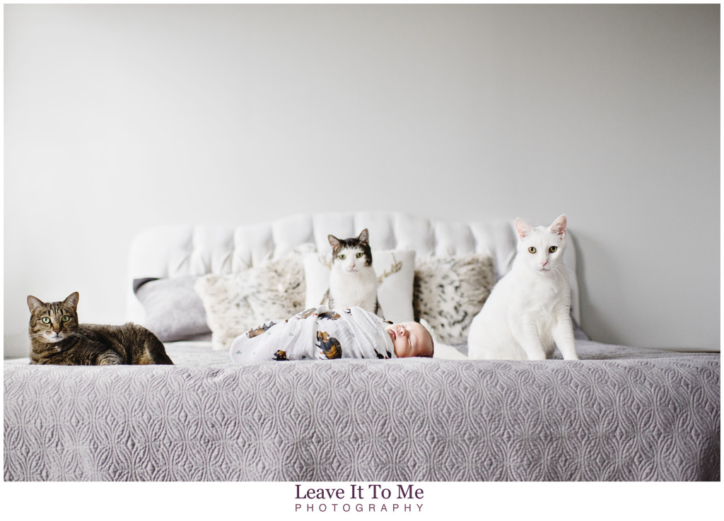 New Jersey Newborn Photographer_Newborn and Pets 5